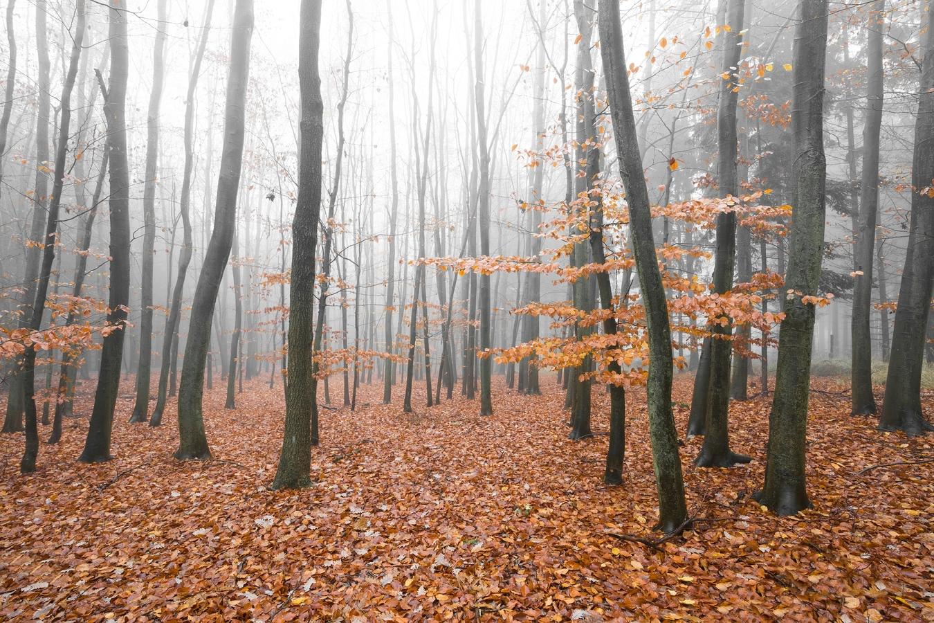 Podzimní nálada...
