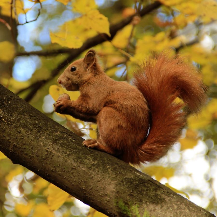 Svačinka  na stromě