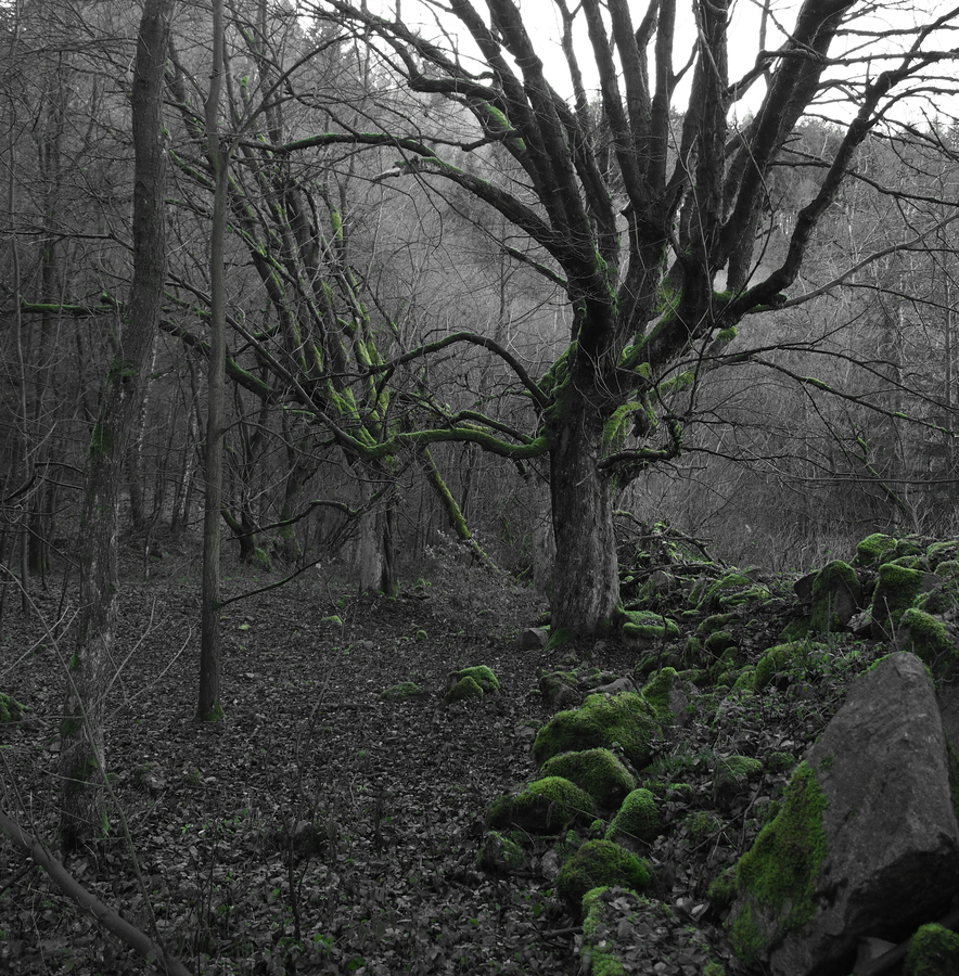 tajemný podzim