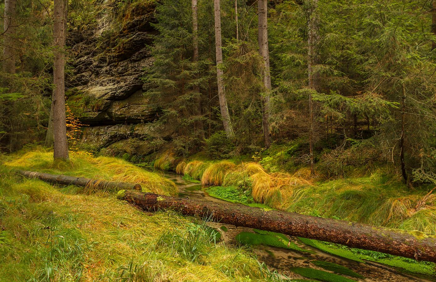 Lesní ticho ..........