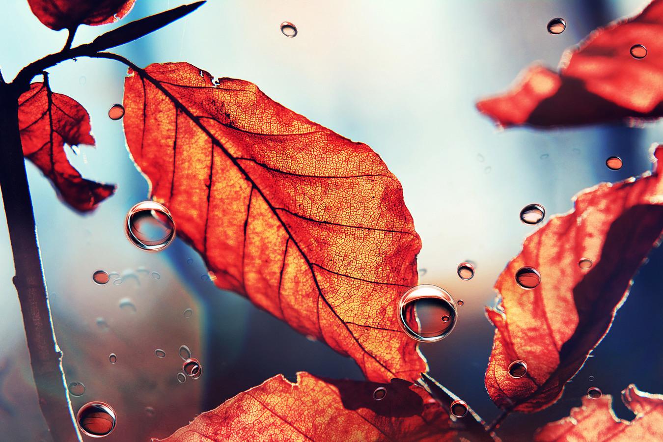Odplouvající podzim