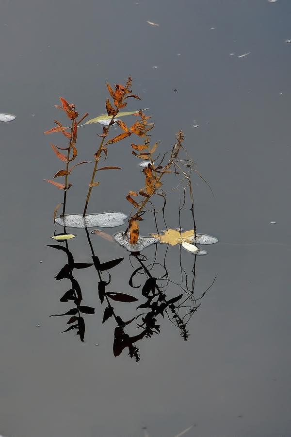 Podzim na řece Svratce......