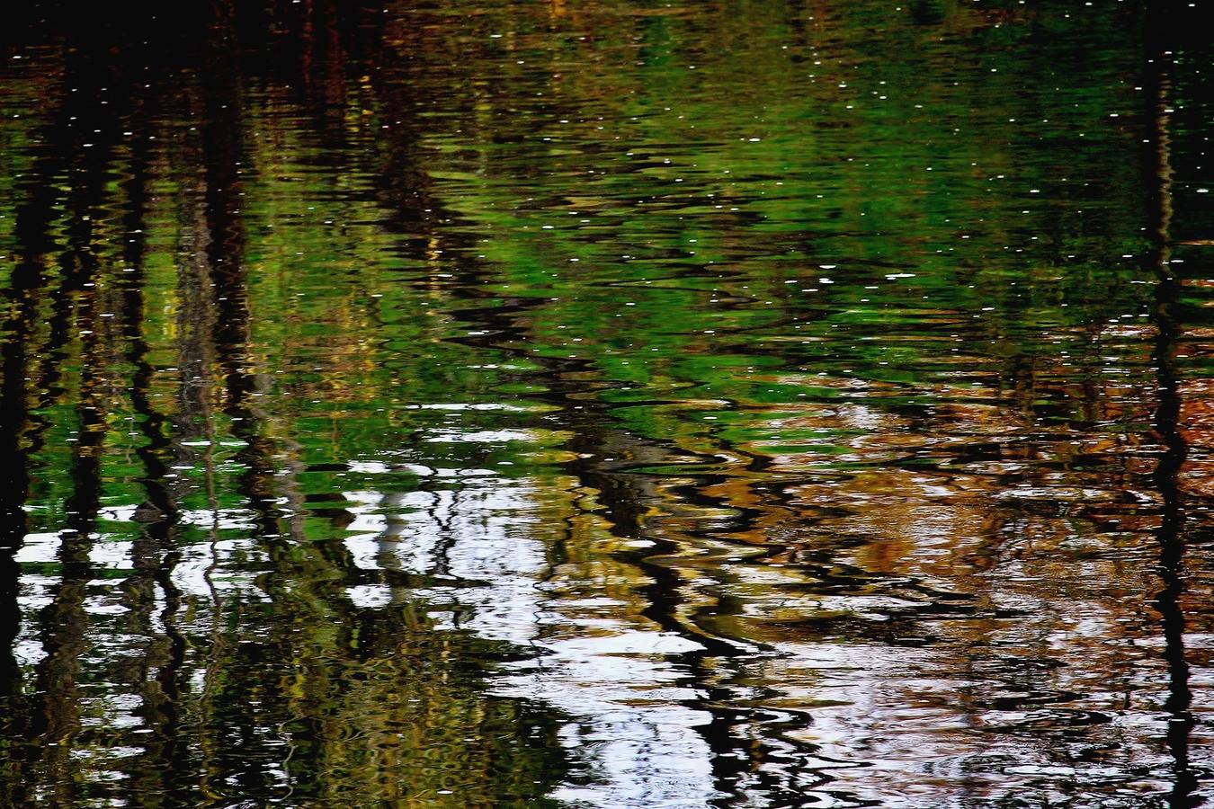 Podzimní abstrakce.....