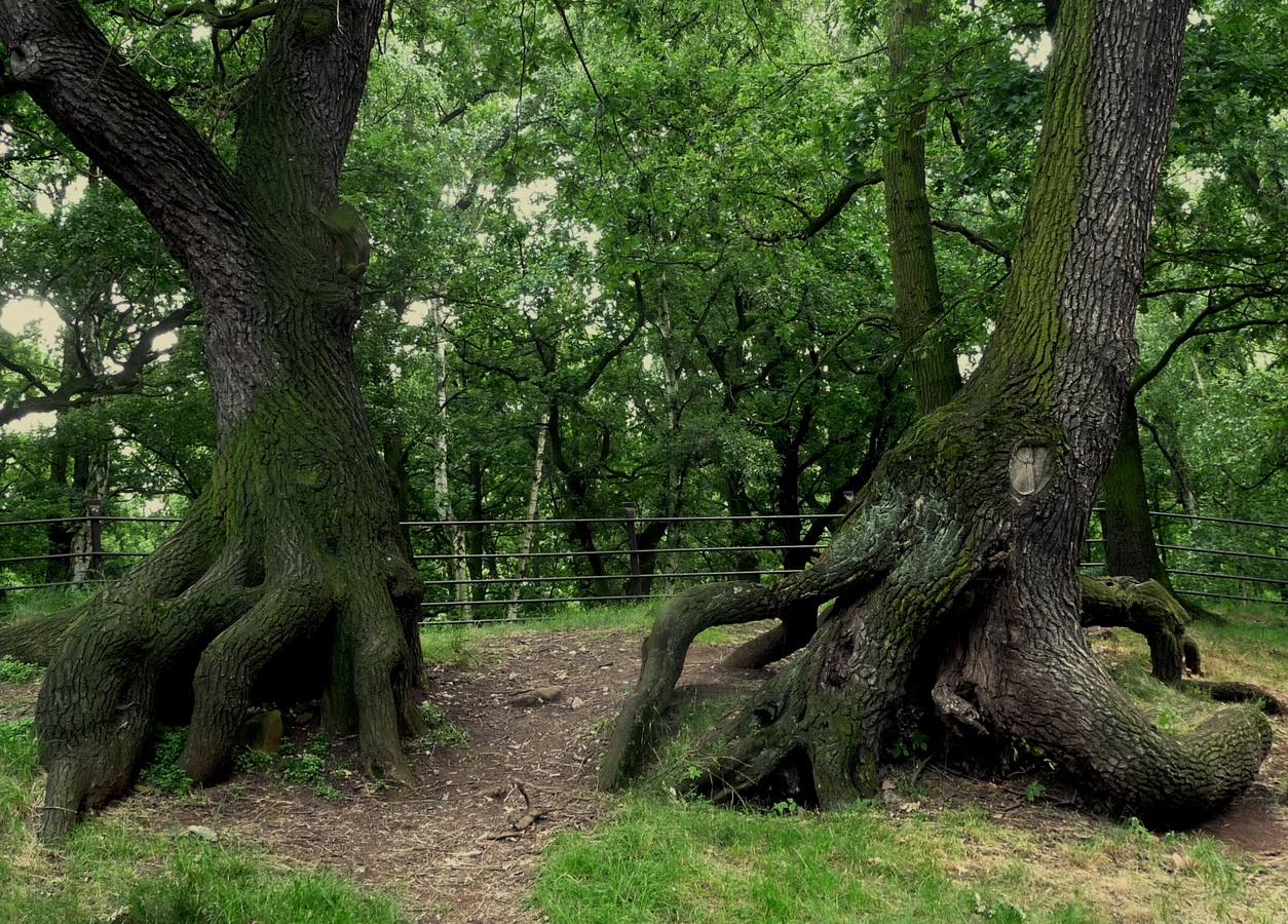 Dialog stromů