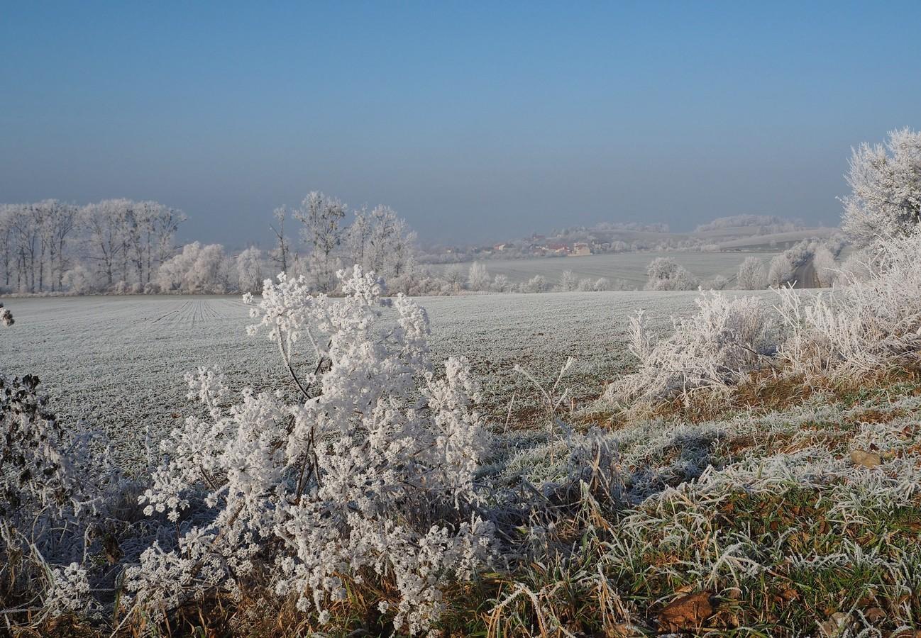 Bílé květy...