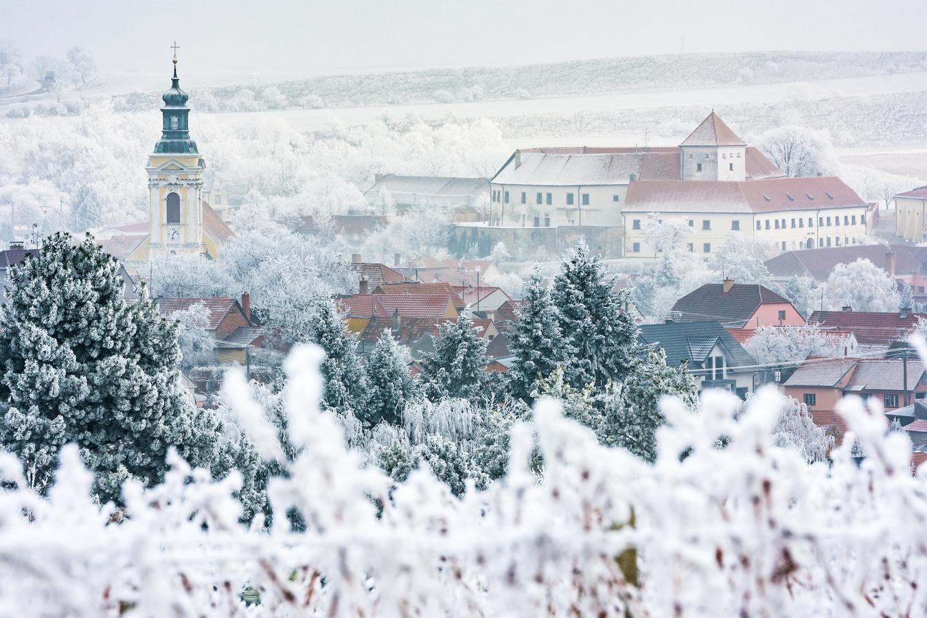 Čejkovice - království ledového vína :-)