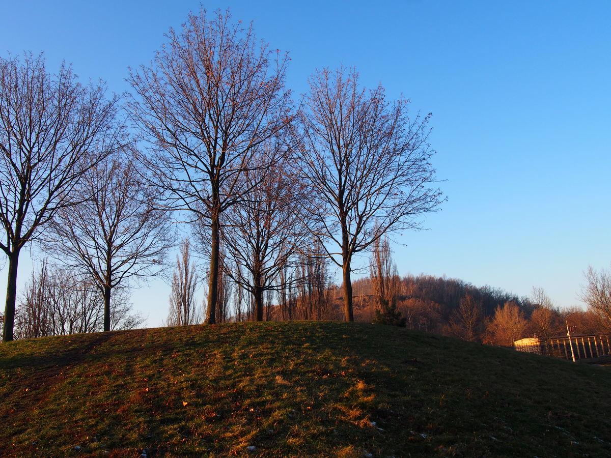 Mladé stromy v parku