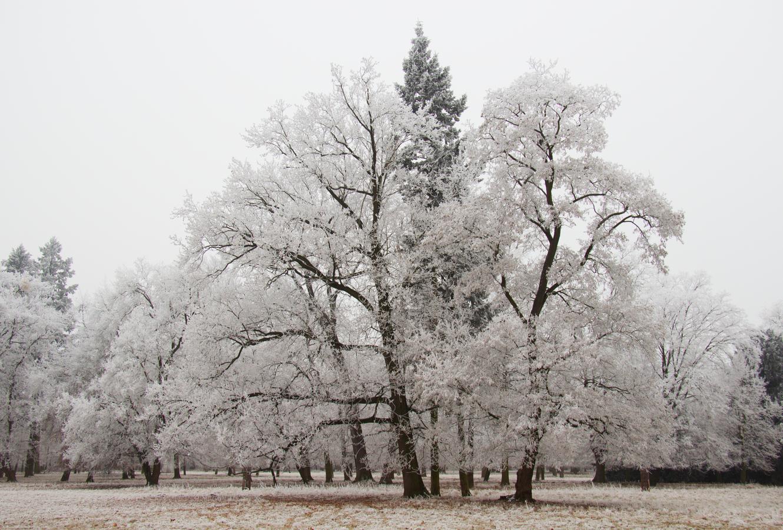 Zimní promenáda