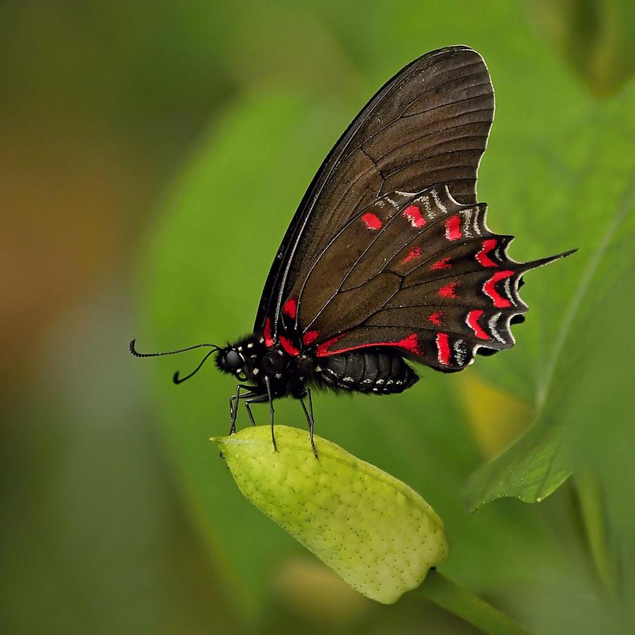 ,,motýl,,