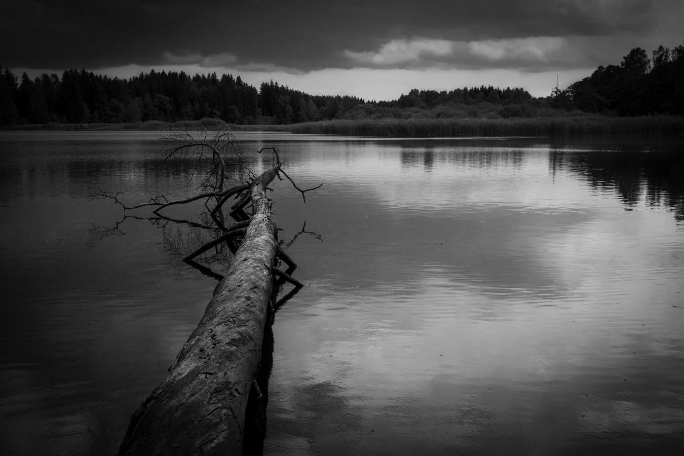 rybník Velká Kamenice
