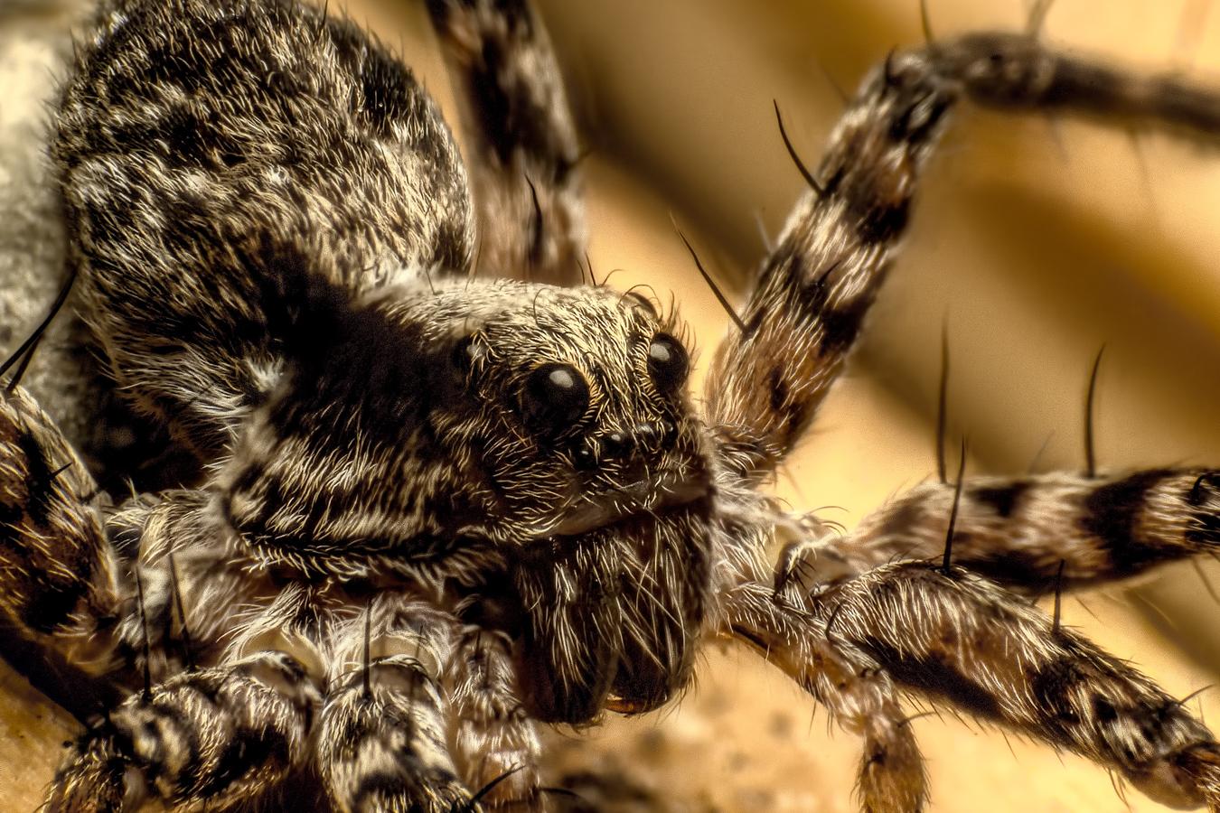 Pavoučisko