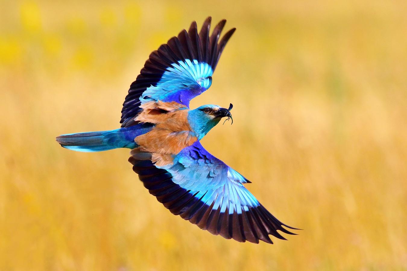 Farby dúhy na krídlach
