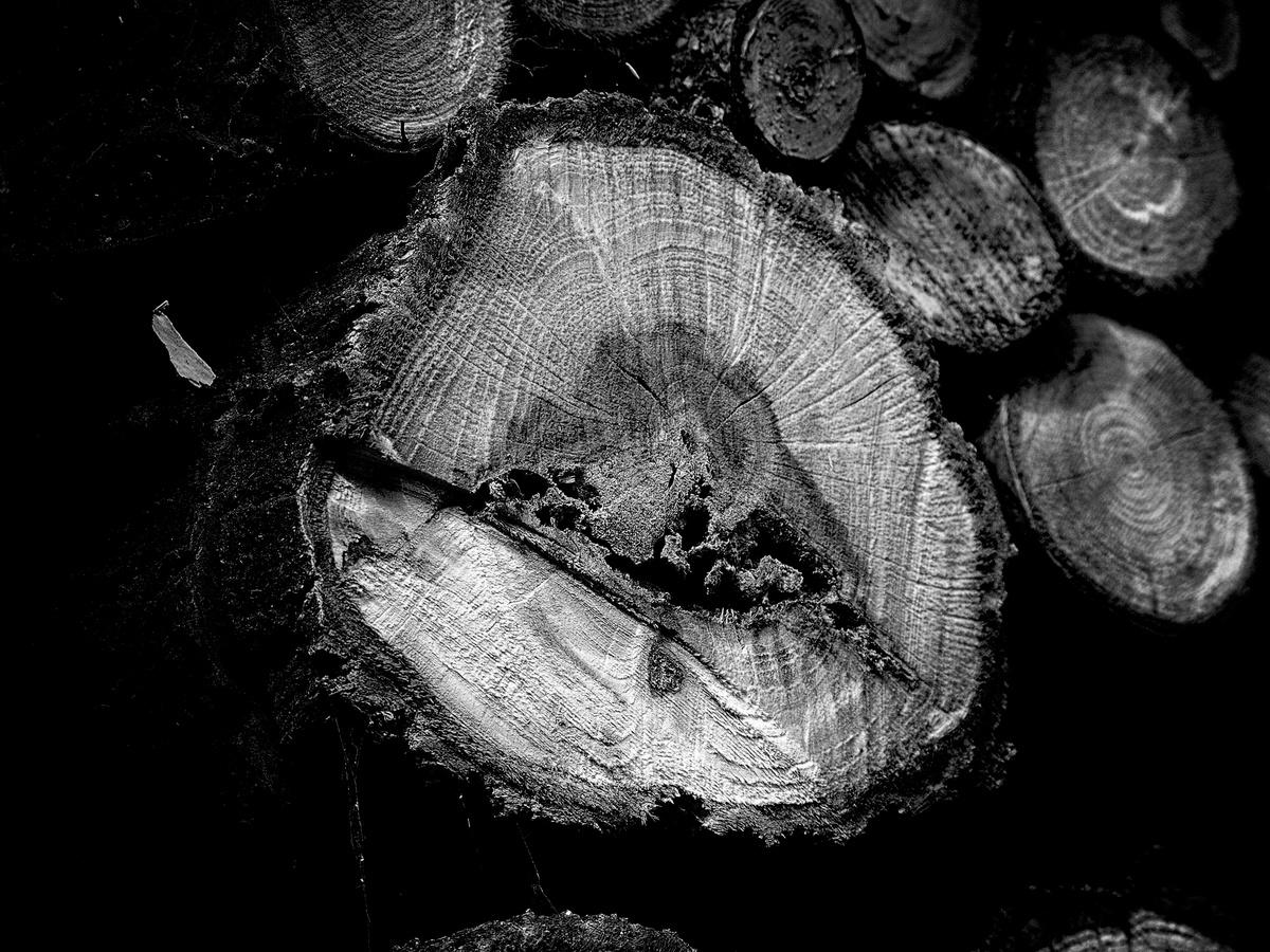 Dřevo I.