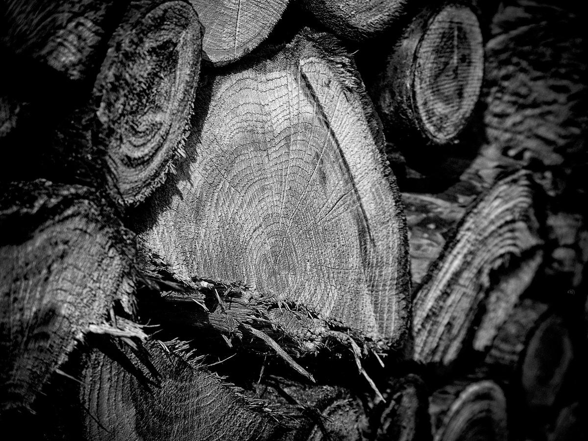 Dřevo II.