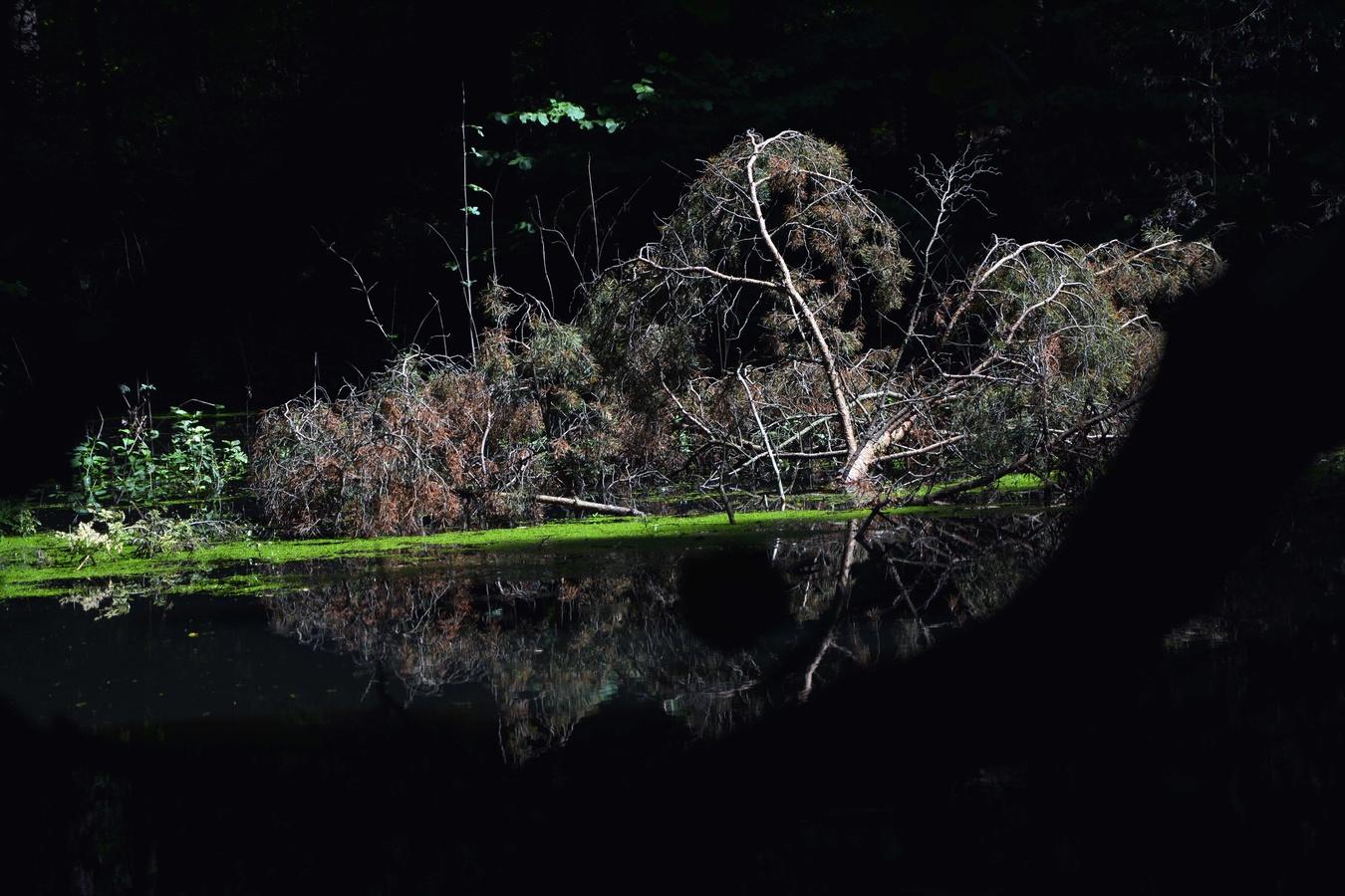 Tajemný rybník