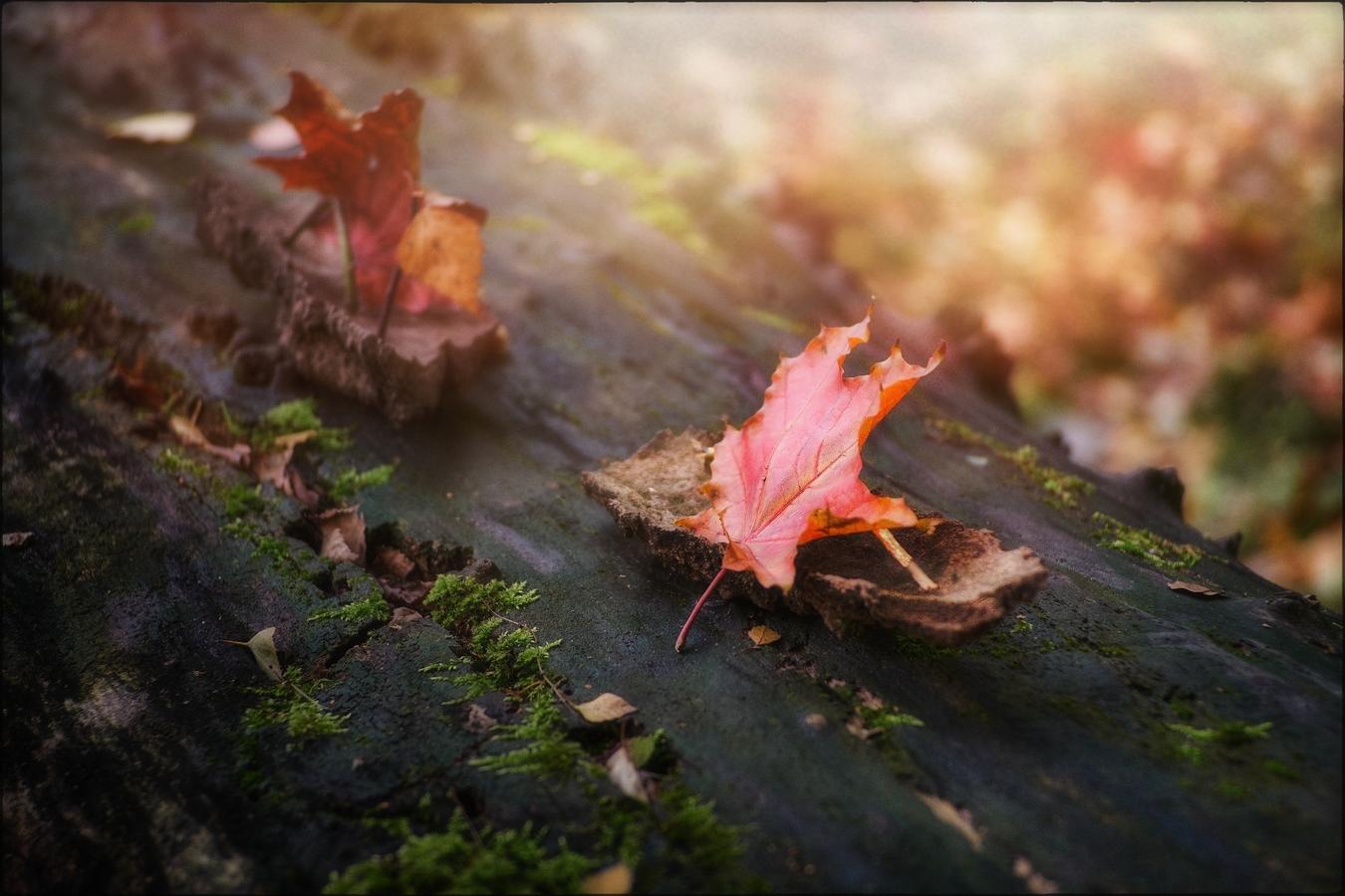 Podzim připlul