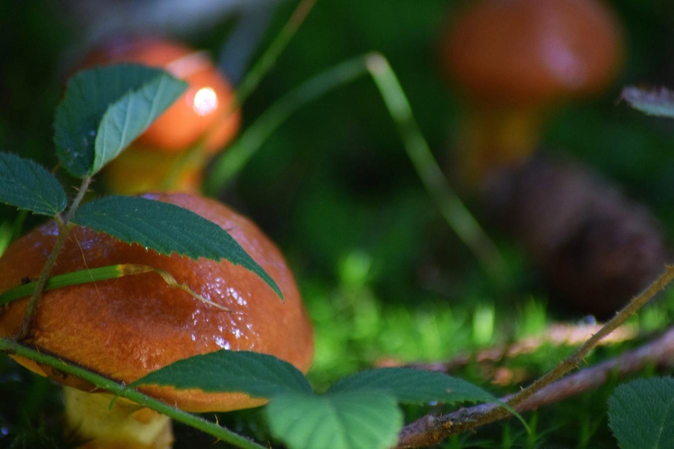 Plody lesa