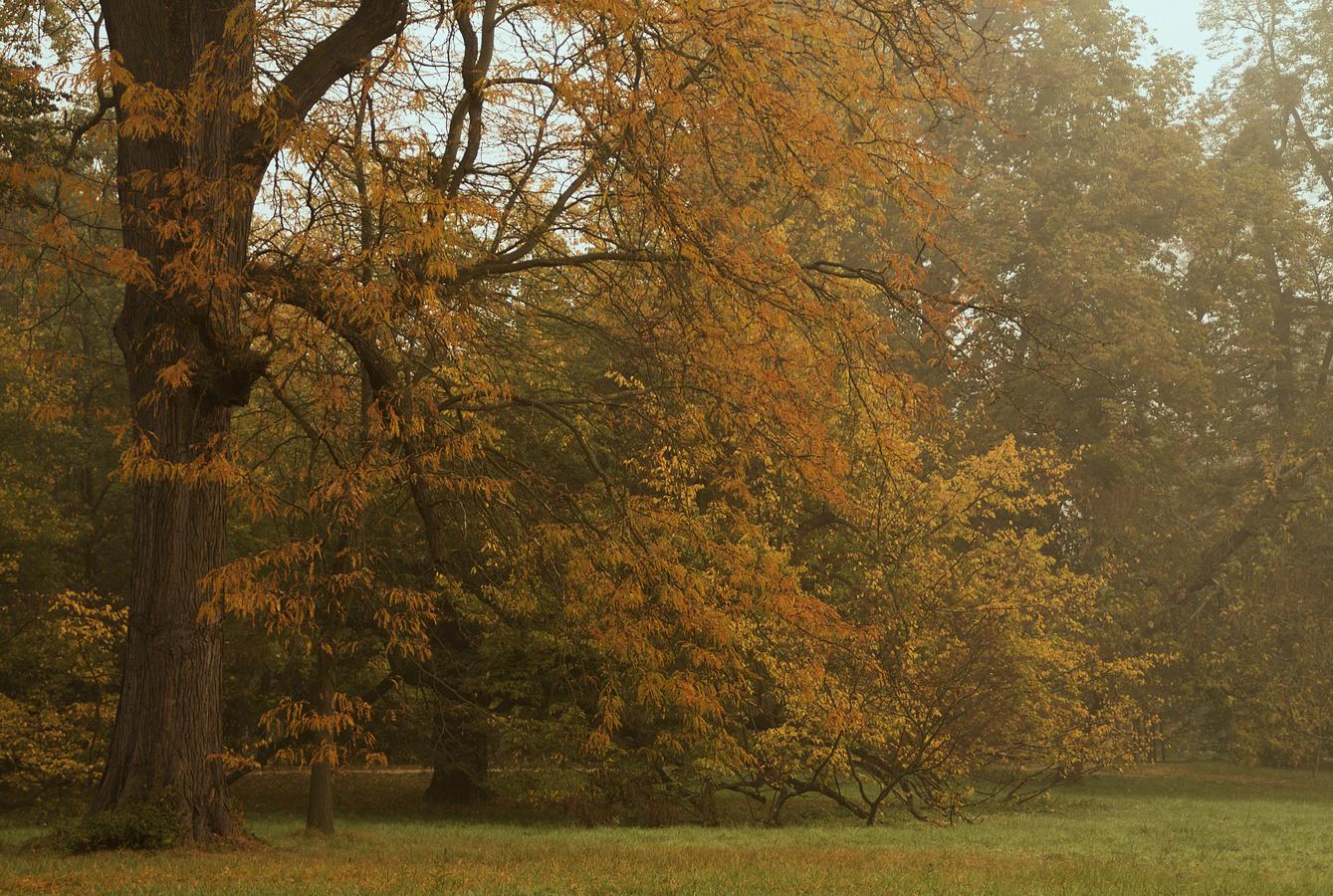A přišel podzim