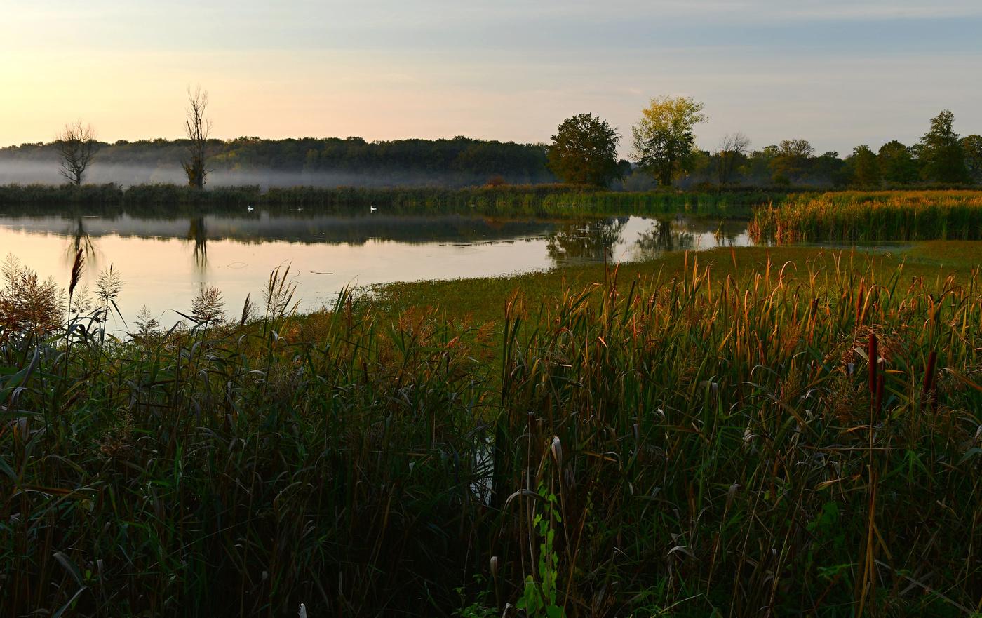 Odpoledne u rybníka