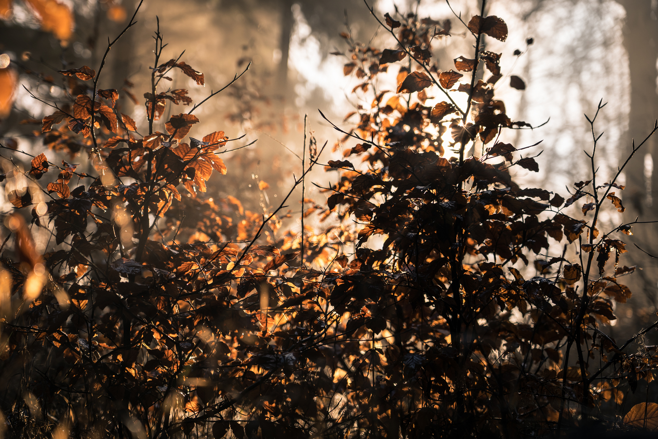 Odpoledne v lese na Trutnovsku