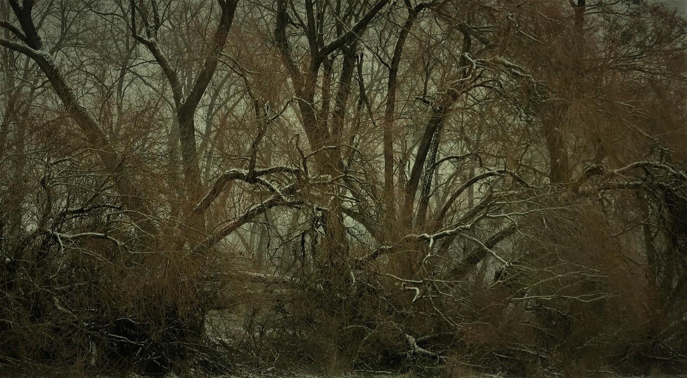 Zima v pralese