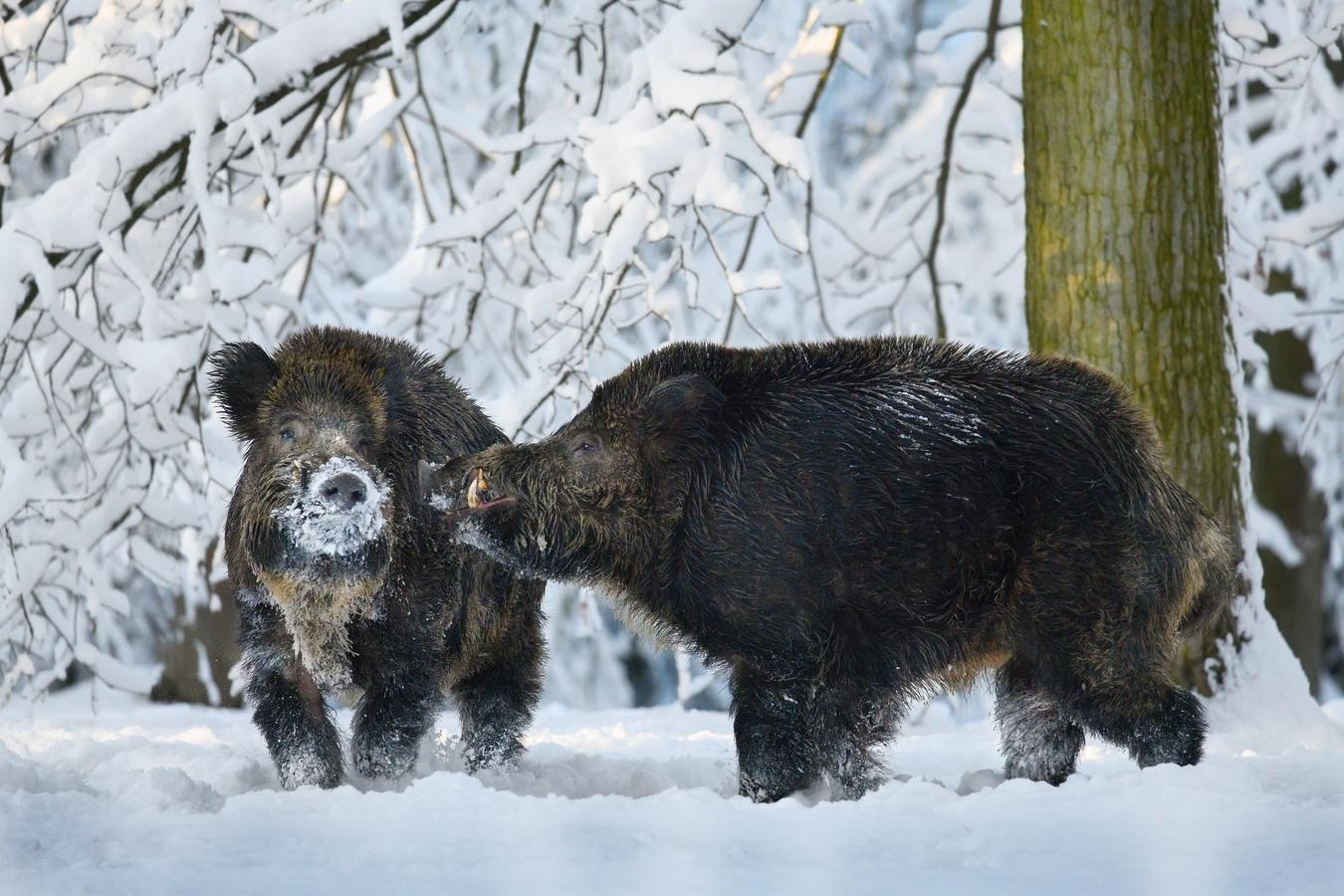 letošní zima v přírodě (2)