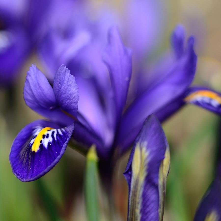 Jarní