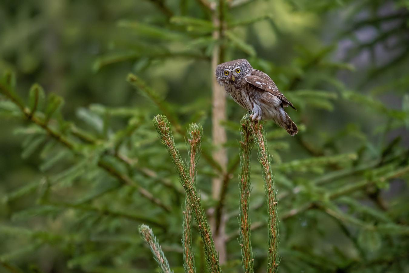 Zvědavec na stromě.