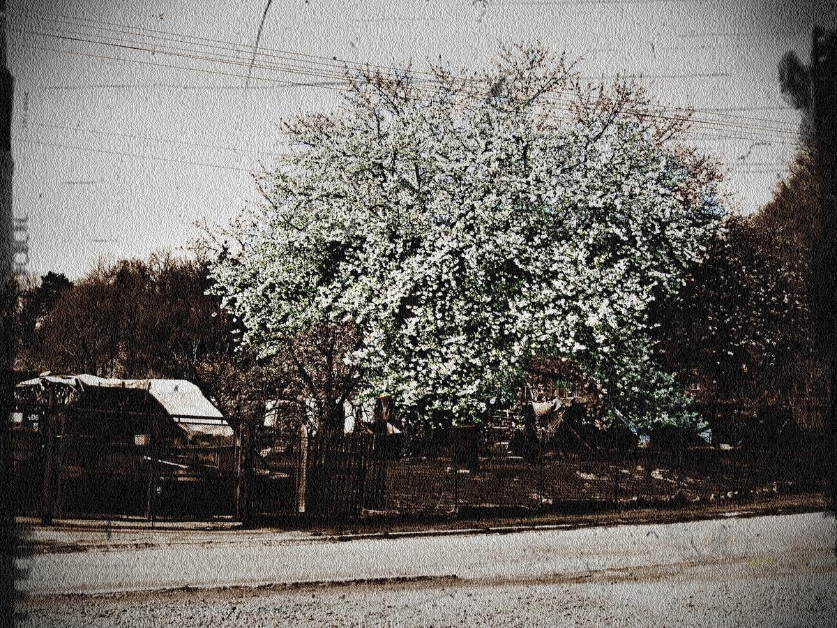 Krásný strom ve staré formě