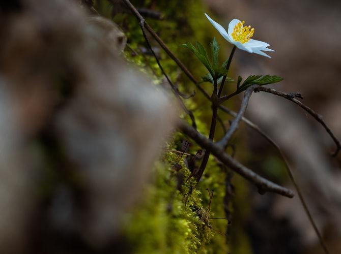 Závan jara v tmavém lese