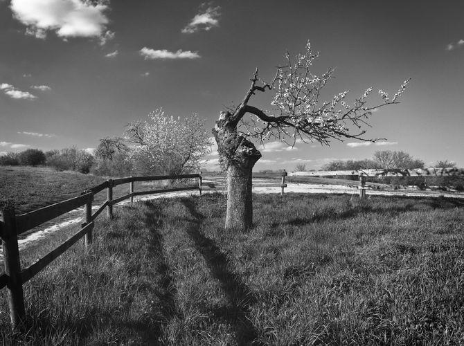 Poslední jaro