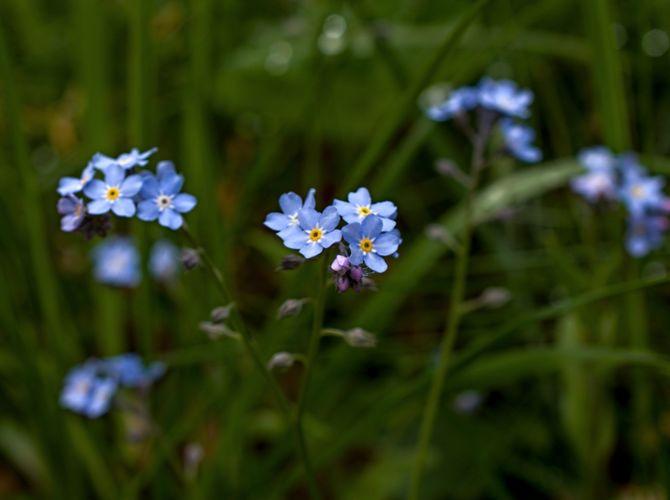 Modrá je dobrá :-)