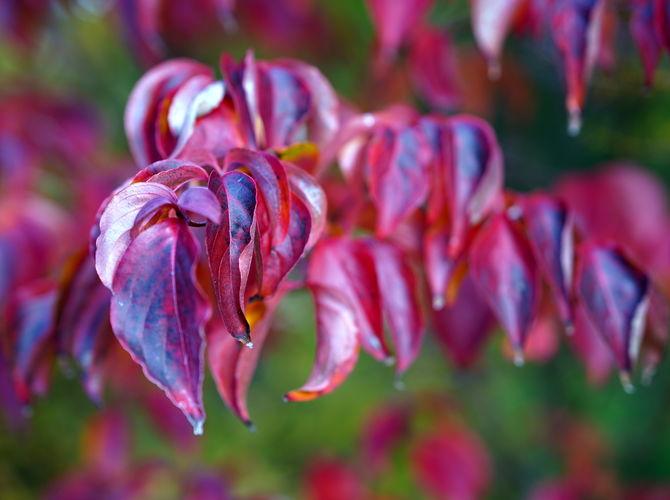 Podzim maluje ...