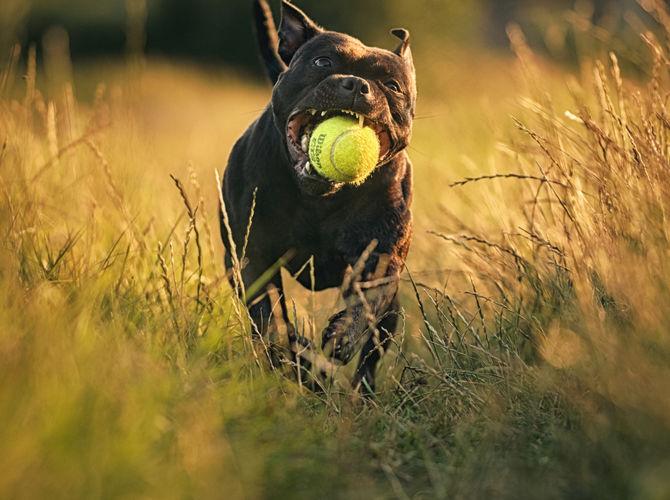Prostě tenis...