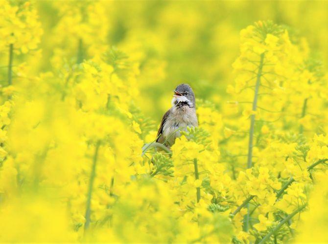 Ve žlutém lese II