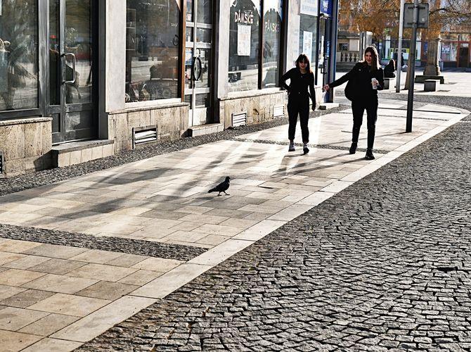 Pozor holub