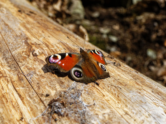 I motýl se rád vyhřívá