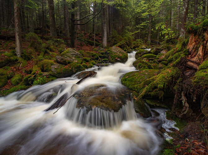 Černý potok v temném lese