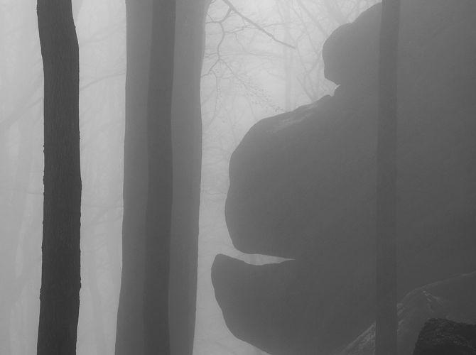 Gorila v mlze...