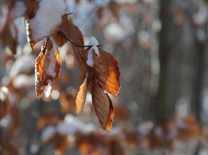 Zimička