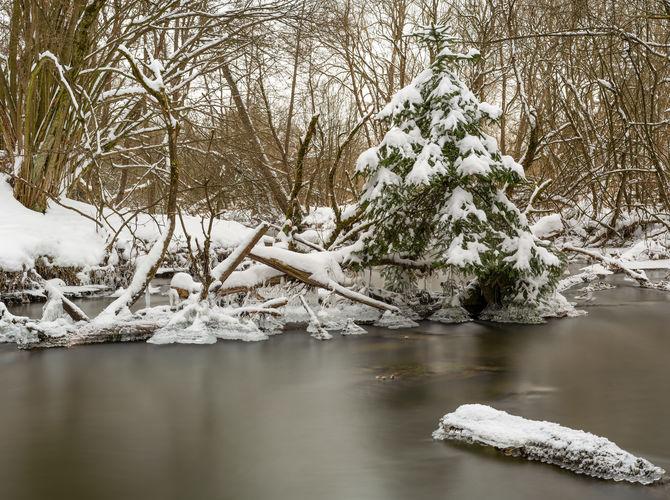 Uprostřed potoka