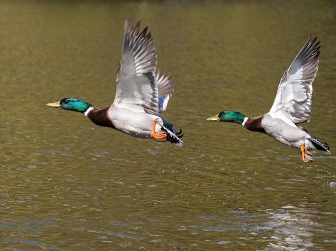 synchronizované létání