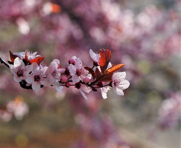 Nekončící jaro