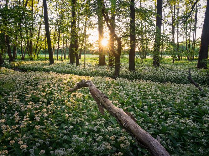 Západ slunce v lužních lesích