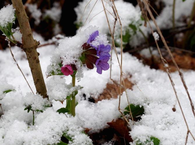 Přibrzděné jaro