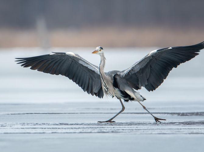 Tanec na ledě