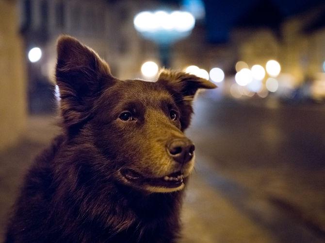 Pes v noci