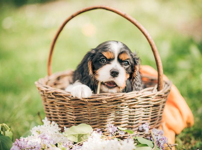 Letní štěně