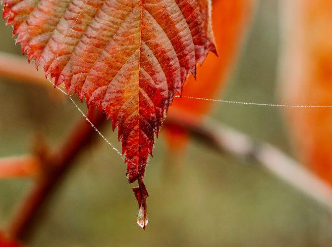 V jesennom čase