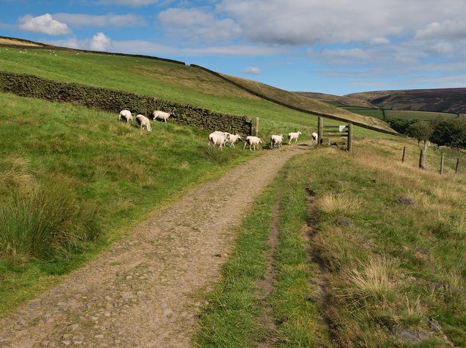 ...Derbyshire Landscape...III.